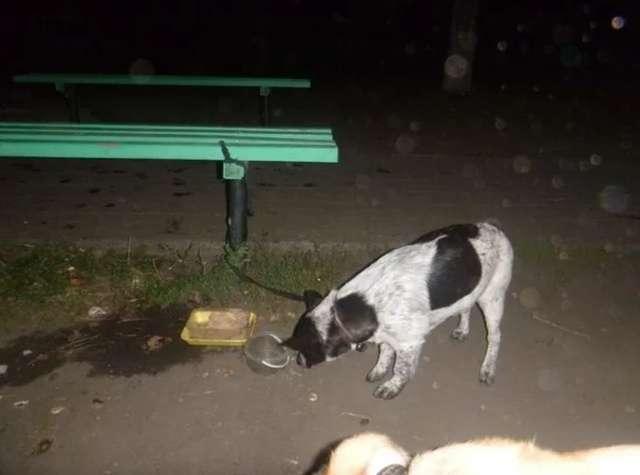 Собака з незвичним листом була привязана до лавки в парку (3 фото)