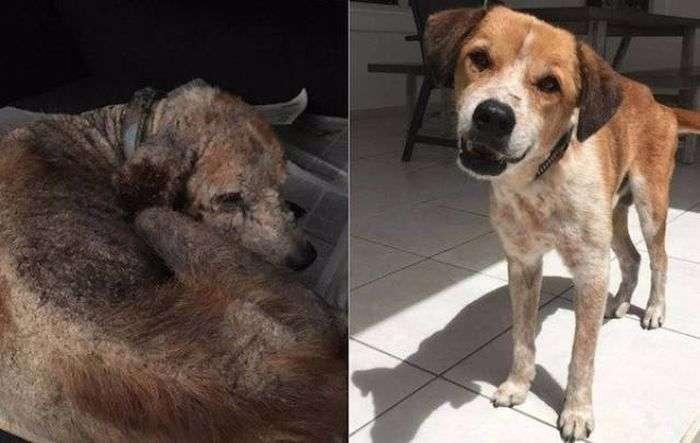 Тварини, яких поселили нові господарі (32 фото)