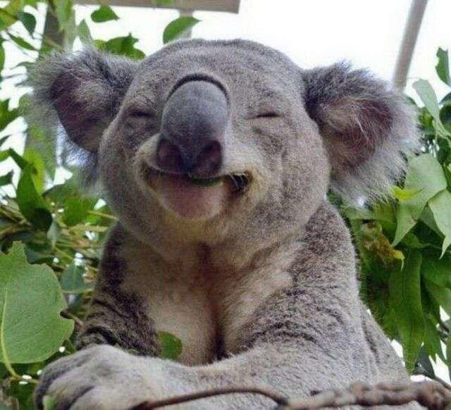 Тварини теж вміють посміхатися (39 фото)
