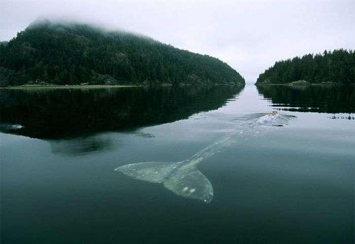 Чудові знімки китів (62 фото)