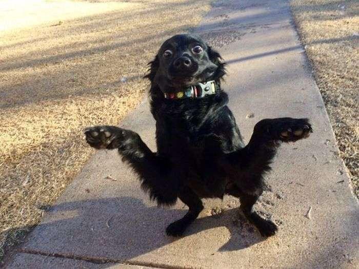Забавні фото собак (18 фото)