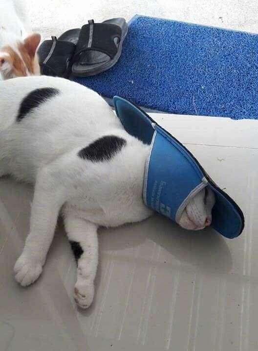 Кіт вирішив пограти з тапками, але програв (4 фото)