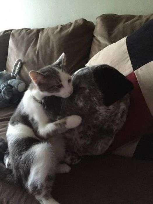 Забавні фото з кішками і собаками (19 фото)