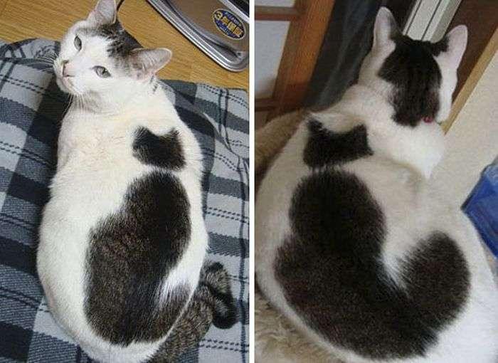 Коти незвичайного забарвлення (25 фото)