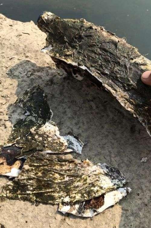 Рибалка виявив дивну пляшку, виявилася важкою ношею для черепахи (4 фото)