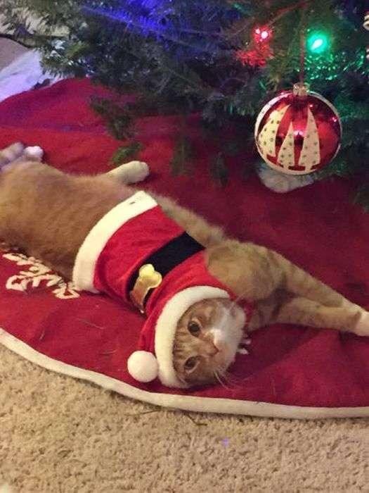 Як захистити новорічну ялинку від домашніх тварин (36 фото)