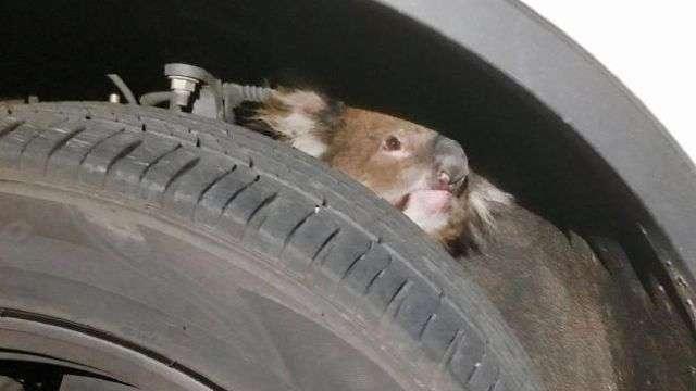 Несподівана знахідка в підвісці позашляховика (3 фото)