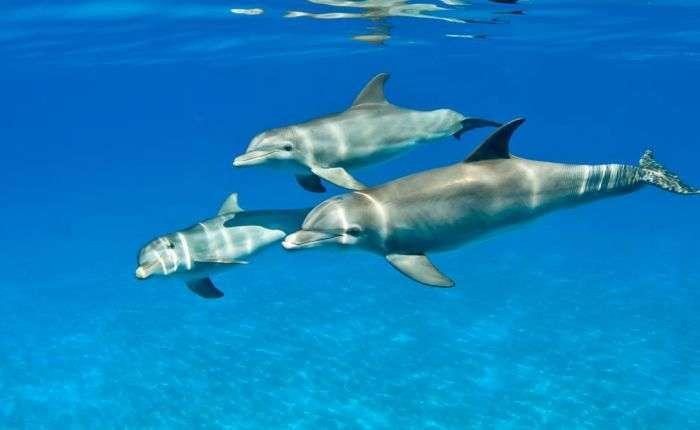 Шокуюча правда про дельфінів (14 фото)