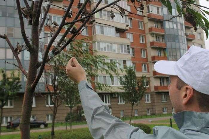 У Санкт-Петербурзі засохлі дерева «оживили» з допомогою гілок і скотча (3 фото)