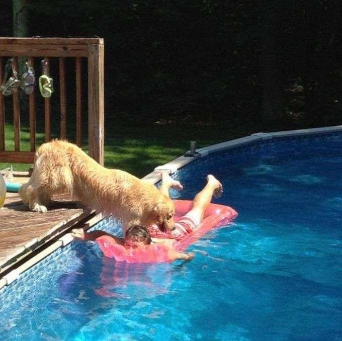 Собака, звикла домагатися того, чого вона хоче (3 фото)