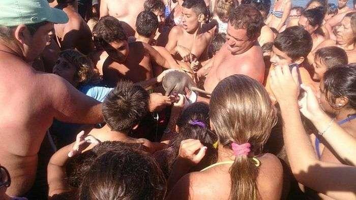 В Аргентині відпочиваючі до смерті закатували викинутого на берег дитинча дельфіна (4 фото)