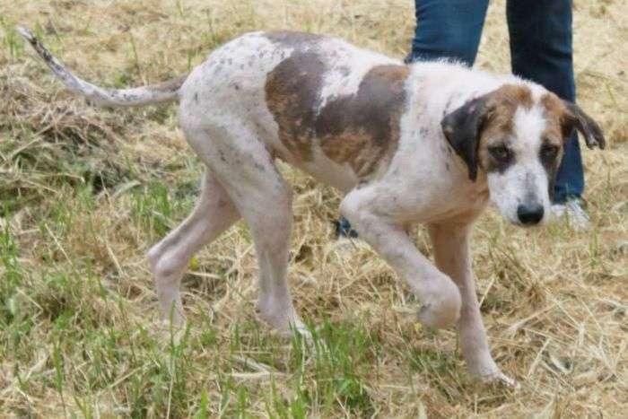Порятунок бездомного собаки по кличці Кхалісі (24 фото)