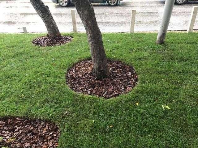 Мешканець Єкатеринбурга облаштував у центрі міста експериментальний газон (3 фото + відео)