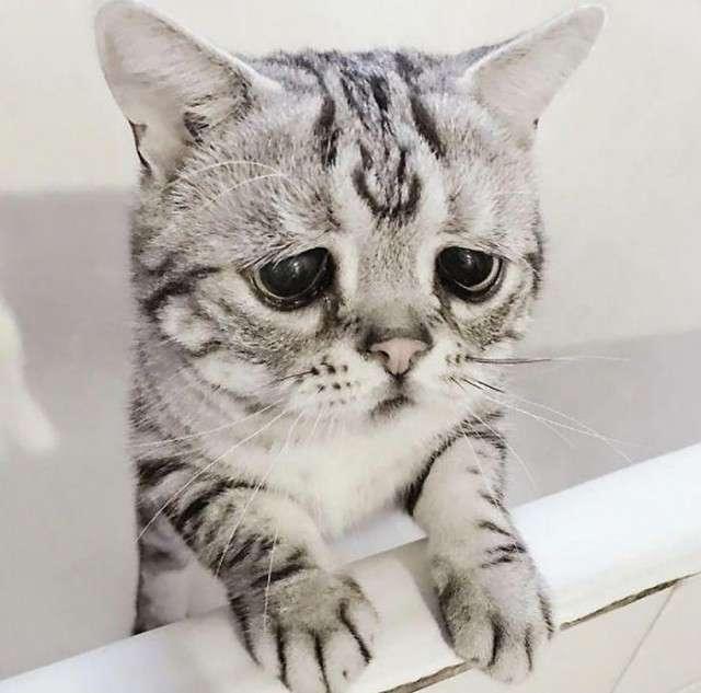 Луху - найсумніша кішка в світі (15 фото)