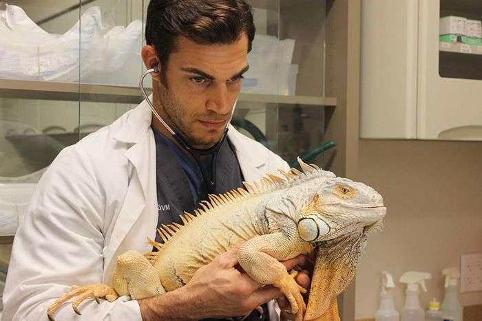 Еван Антін - найсексуальніший ветеринар у світі (33 фото)