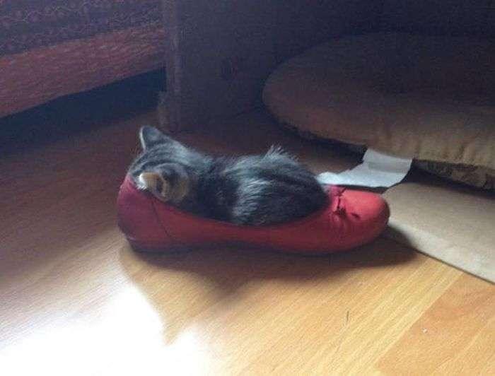 Головне, щоб котам було зручно (33 фото)