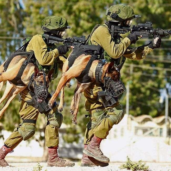 Переноска тактичних собак в ізраїльській армії (3 фото)