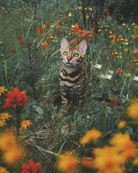 Кішка-мандрівниця з Канади (36 фото)