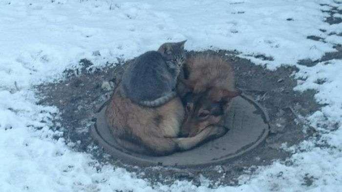 Взаємодопомогу у тваринному світі (2 фото)