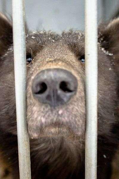 У Челябінську зявилася «медвебака» (4 фото)