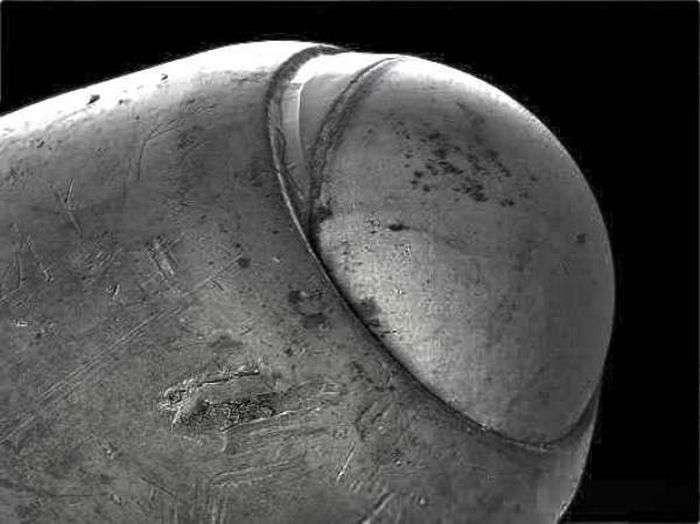 Світ під мікроскопом (18 фото)