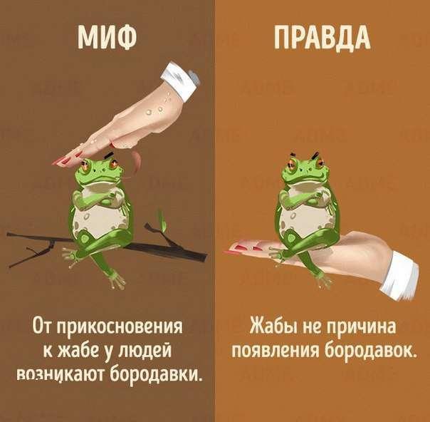 Міфи і правда про тварин (10 картинок)