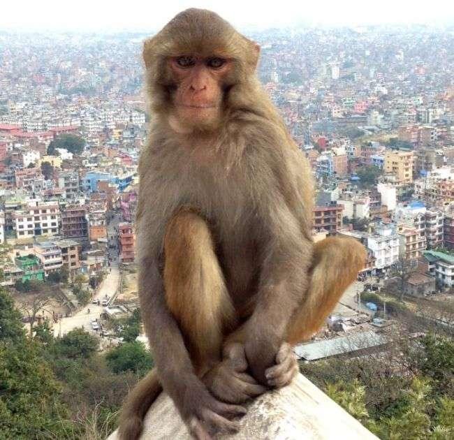 Фото на память з мавпою (4 фото)