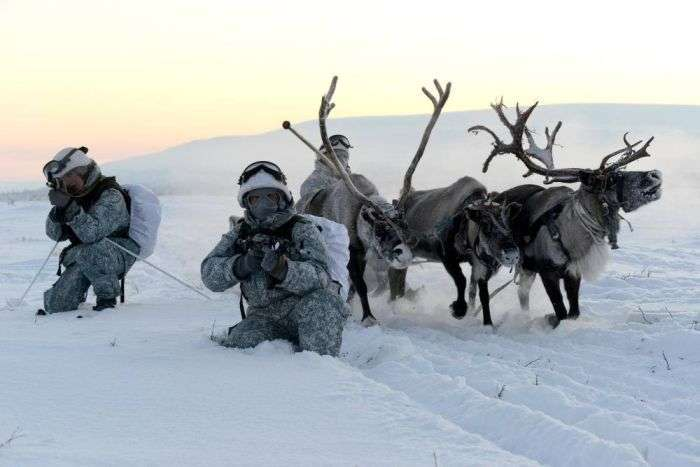 Російські розвідники навчилися управляти собачими і оленячими упряжками (15 фото)