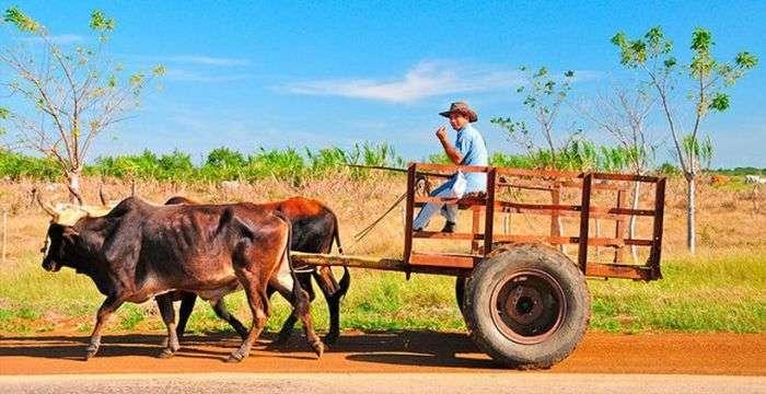 Чого не варто робити на Кубі (12 фото)