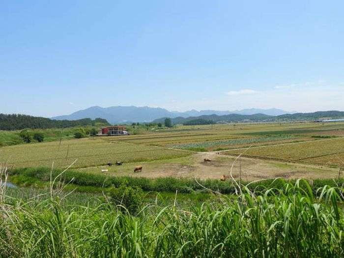 Різниця між Південною та Північною Кореєю (14 фото)