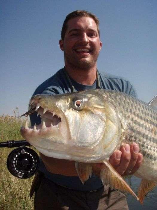 9 найбільш небезпечних риб у світі (9 фото)