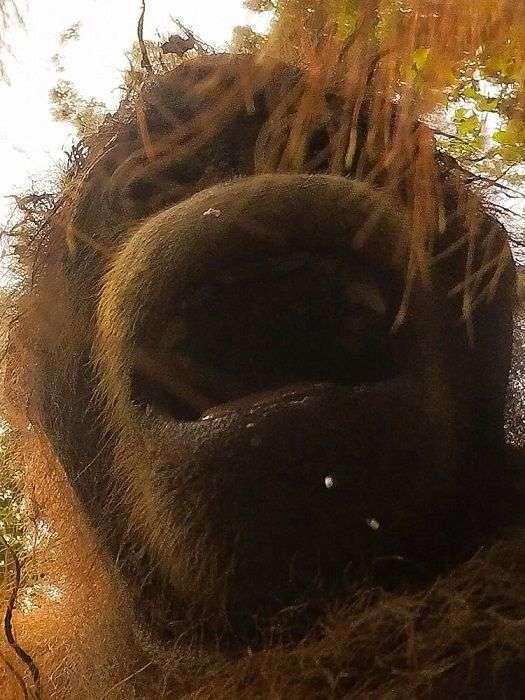 Орангутан знайшов у лісі екшн-камеру і зробив унікальні селфи (8 фото)