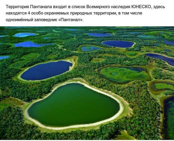 Пантанал - справжній рай на землі (10 фото)