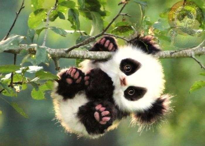 Дитинчата незвичайних тварин (15 фото)
