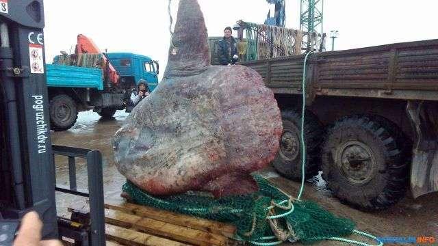 Рибалки зловили величезну рибу, але їхня радість тривала недовго (2 фото)