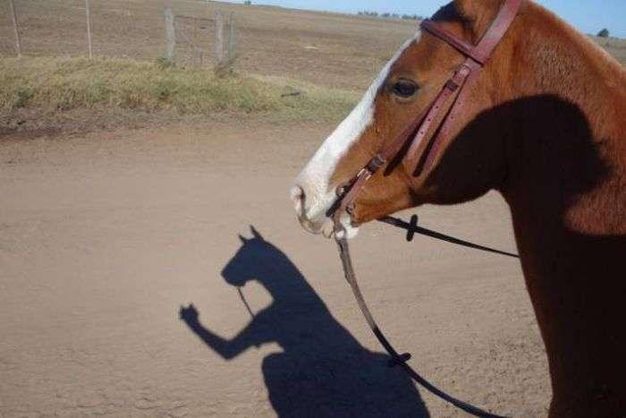 Химерні тіні (17 фото)