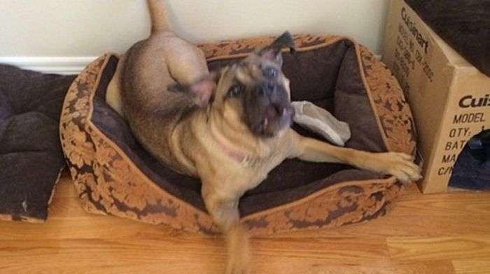 Як мало потрібно, щоб порадувати свого пса (2 фото)