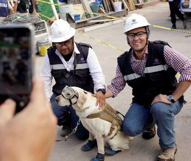 На рахунку цієї собаки десятки врятованих життів, зробили її національним героєм Мексики (4 фото)
