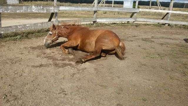 Кінь-довгожитель на прізвисько Дід (10 фото)
