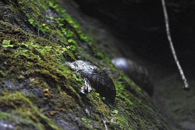 Скеля з «камяними яйцями» принесла популярність китайської селі (6 фото)