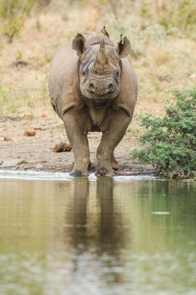 Фото дикої природи сина Стіва Ірвіна Роберта (39 фото)