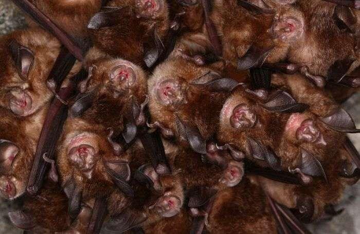 В Японії тисячі кажанів ховалися від холоду у водосточном тунелі (14 фото)