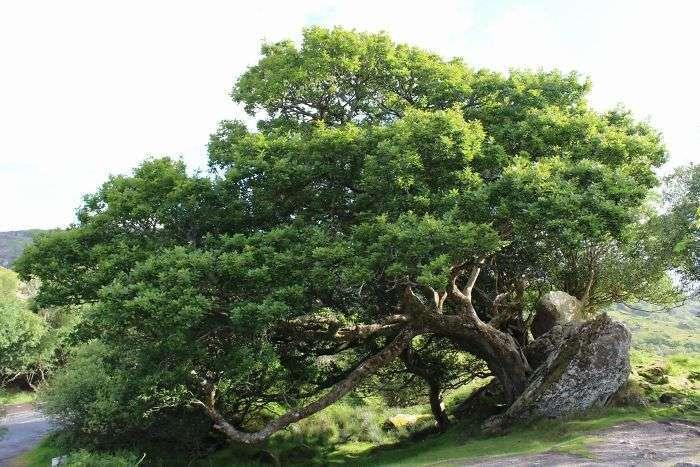 Дерева, що ростуть в незвичайних місцях (31 фото)