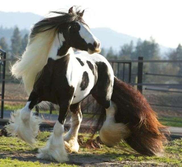 Коні з вусами (10 фото)