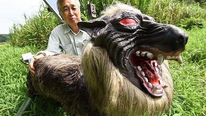 Робот-вовк на охорону японських полів (4 фото + відео)