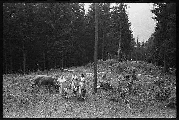 Мирне життя австрійців в роки Другої світової війни (15 фото)