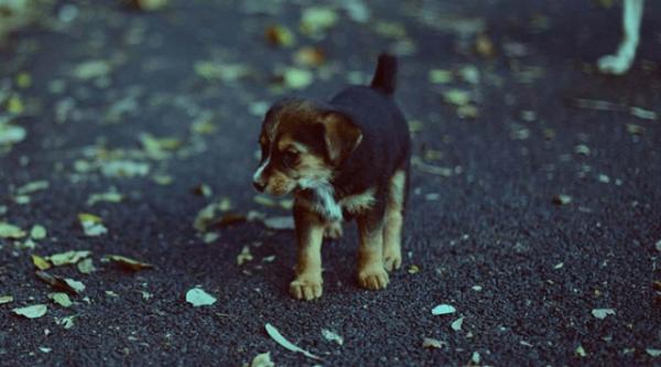 Девушка подобрала беспризорного щеночка, не подозревая, что ей грозит Интересное