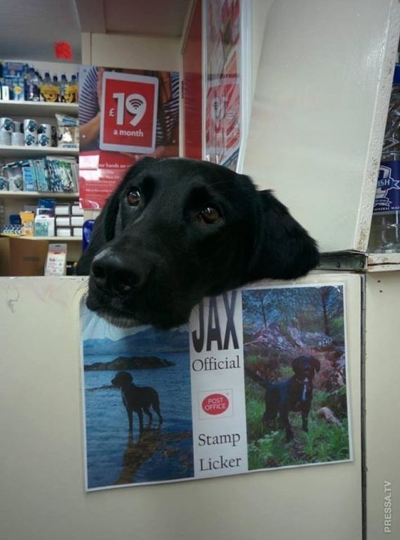 Очаровательные собаки, у которых есть отличная работа Интересное