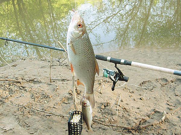 Весной на Рутке с фидером Охота и рыбалка