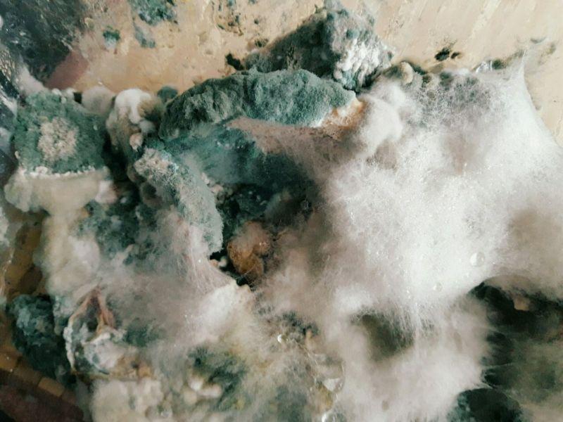 Инопланетные пейзажи и заснеженные горы: народ выращивает плесень и показывает, что получилось МиР
